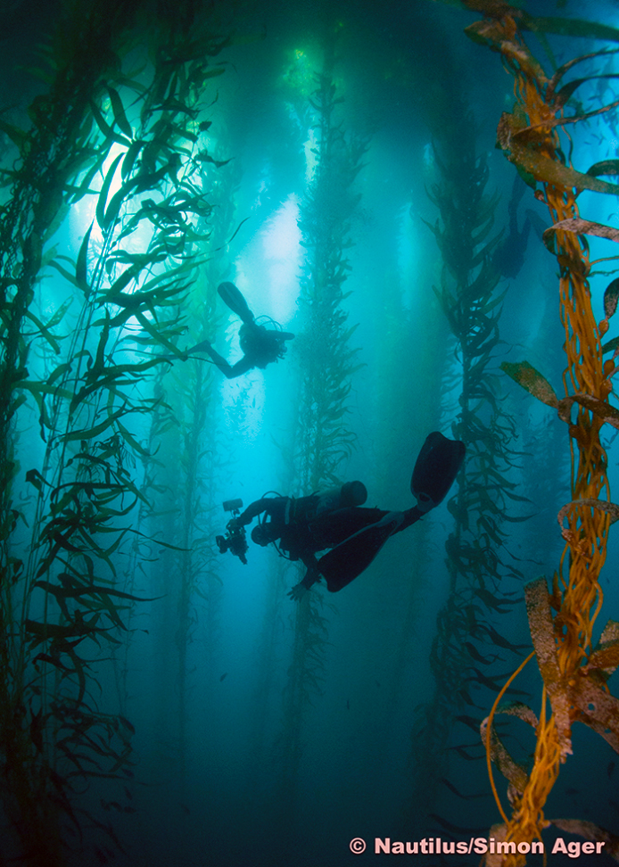 The inspiring Kelp forests of San Benitos
