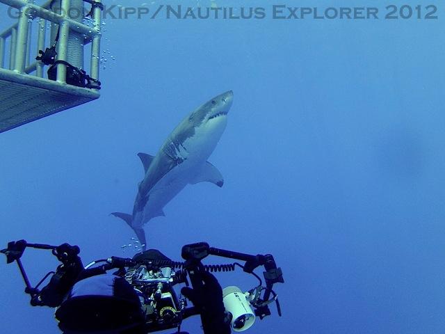 2 full great white shark breaches