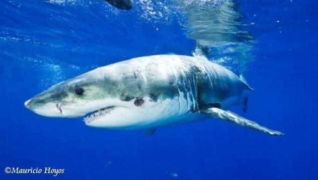 sharks 2w