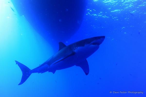 Best of Shark Trip (6) (800x533)w