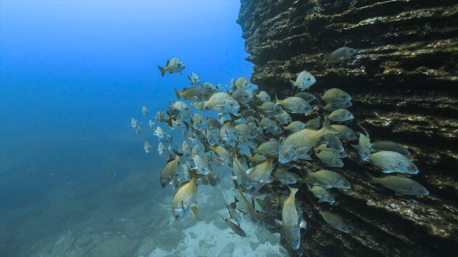 fish schooling by wall