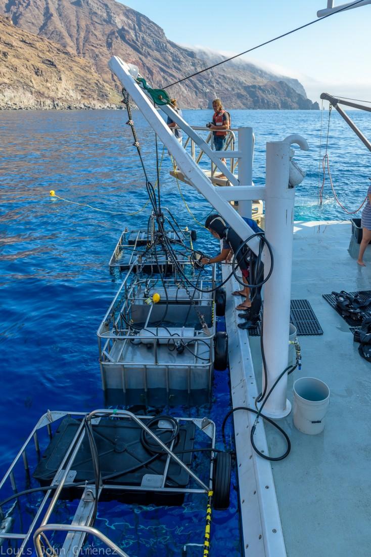 crew preparing the shark cages