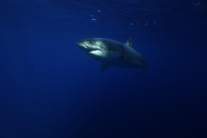 First-time Shark Diver meets a shark!