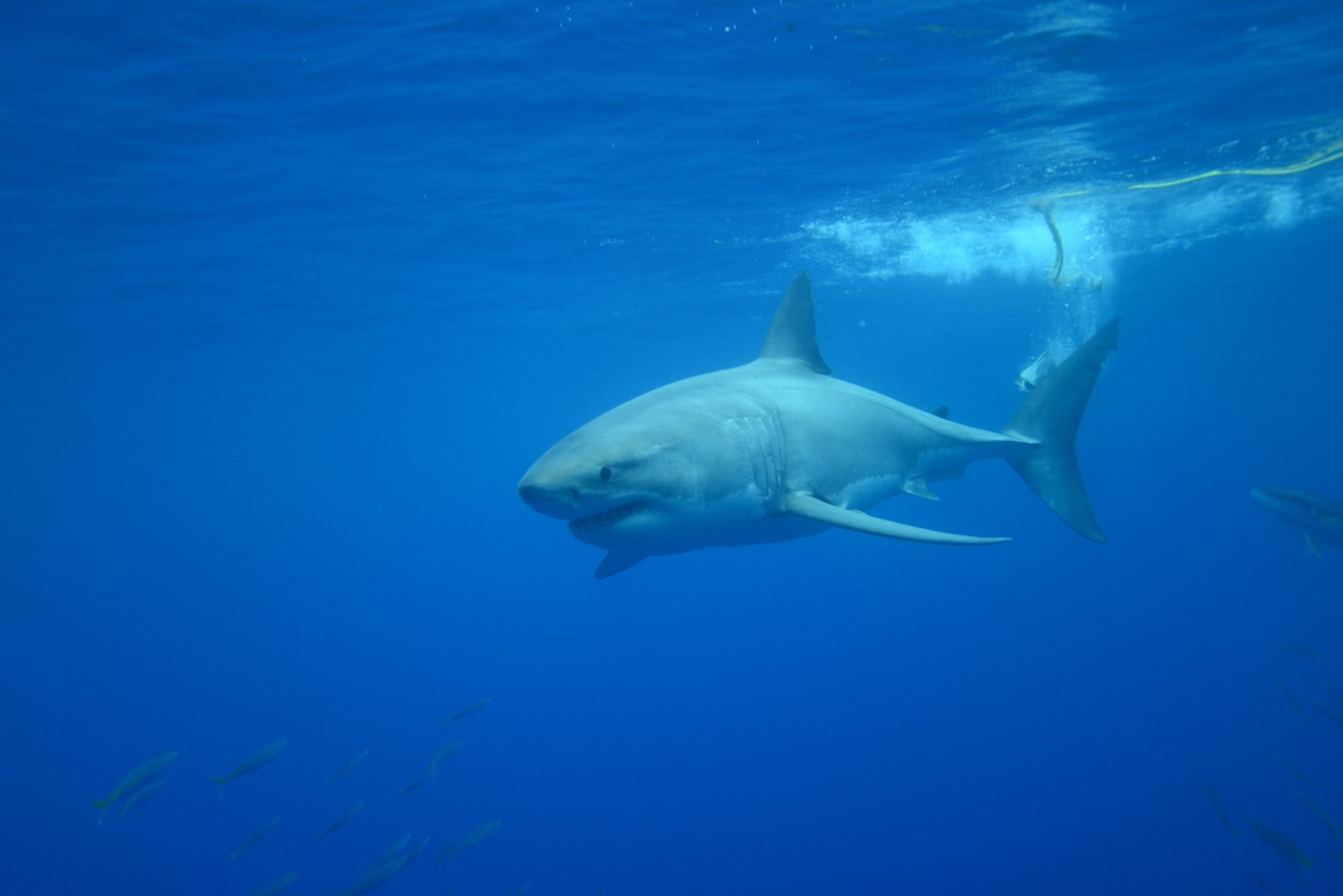 The sharks are spectacular!