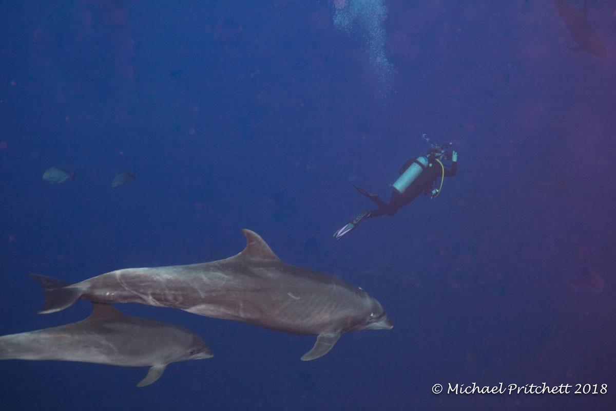 Dolphins circling diver at Cabo Pearce