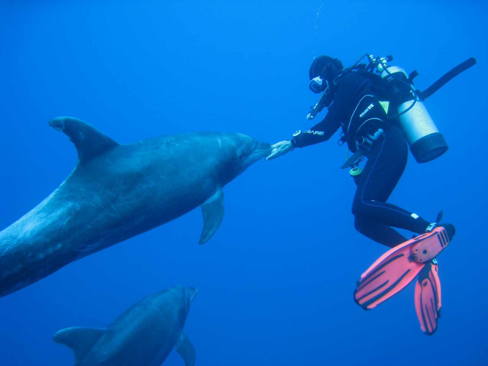 Dolphin gets friendly with diver