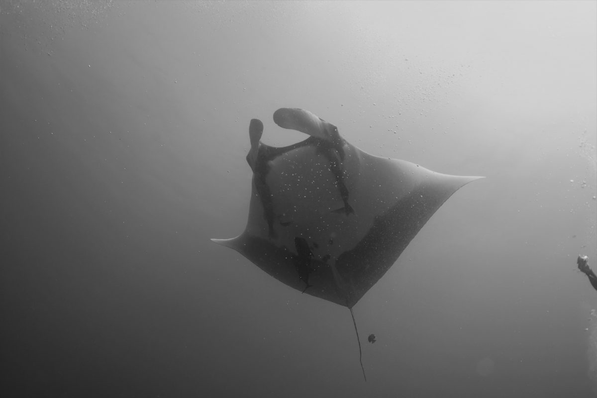 Divemaster Anthony's Roca Report