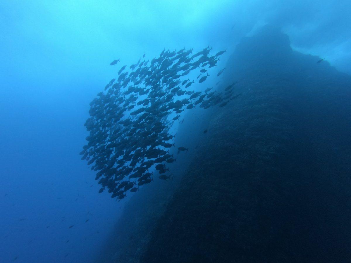 huge school of fish at the famous roca partida