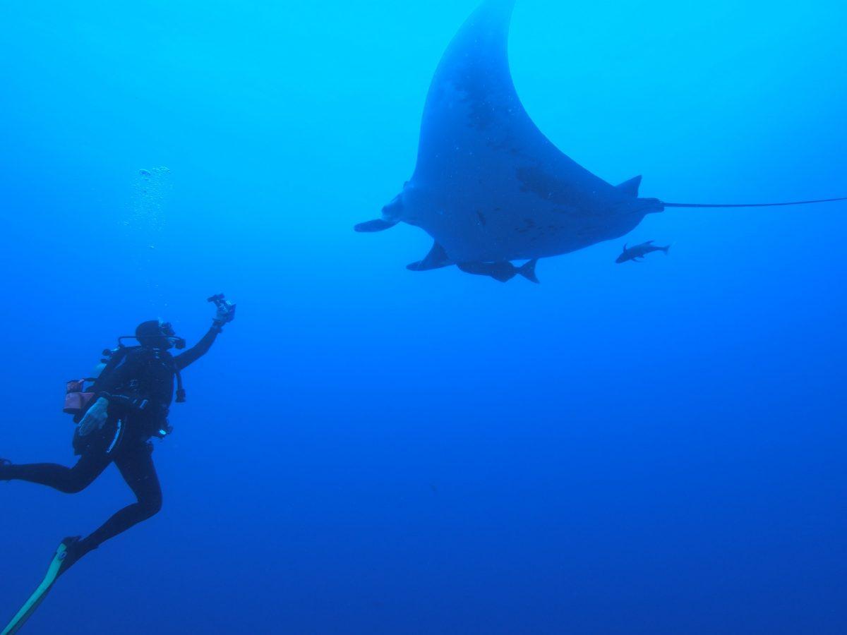 diver reaches forward to get a shot of a giant manta