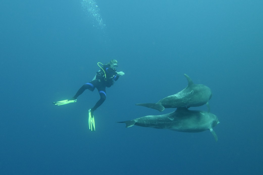 two dolphin swim by an observing diver