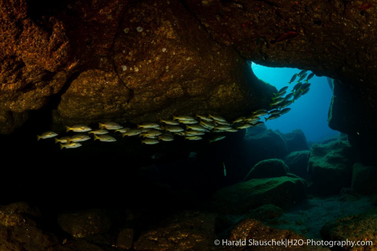 a streamlined school of fish swim through a natural rock archway