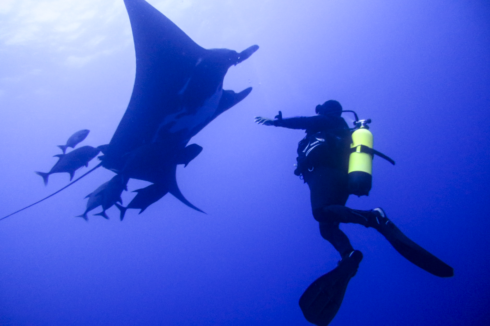Manta and Diver at San Benedicto