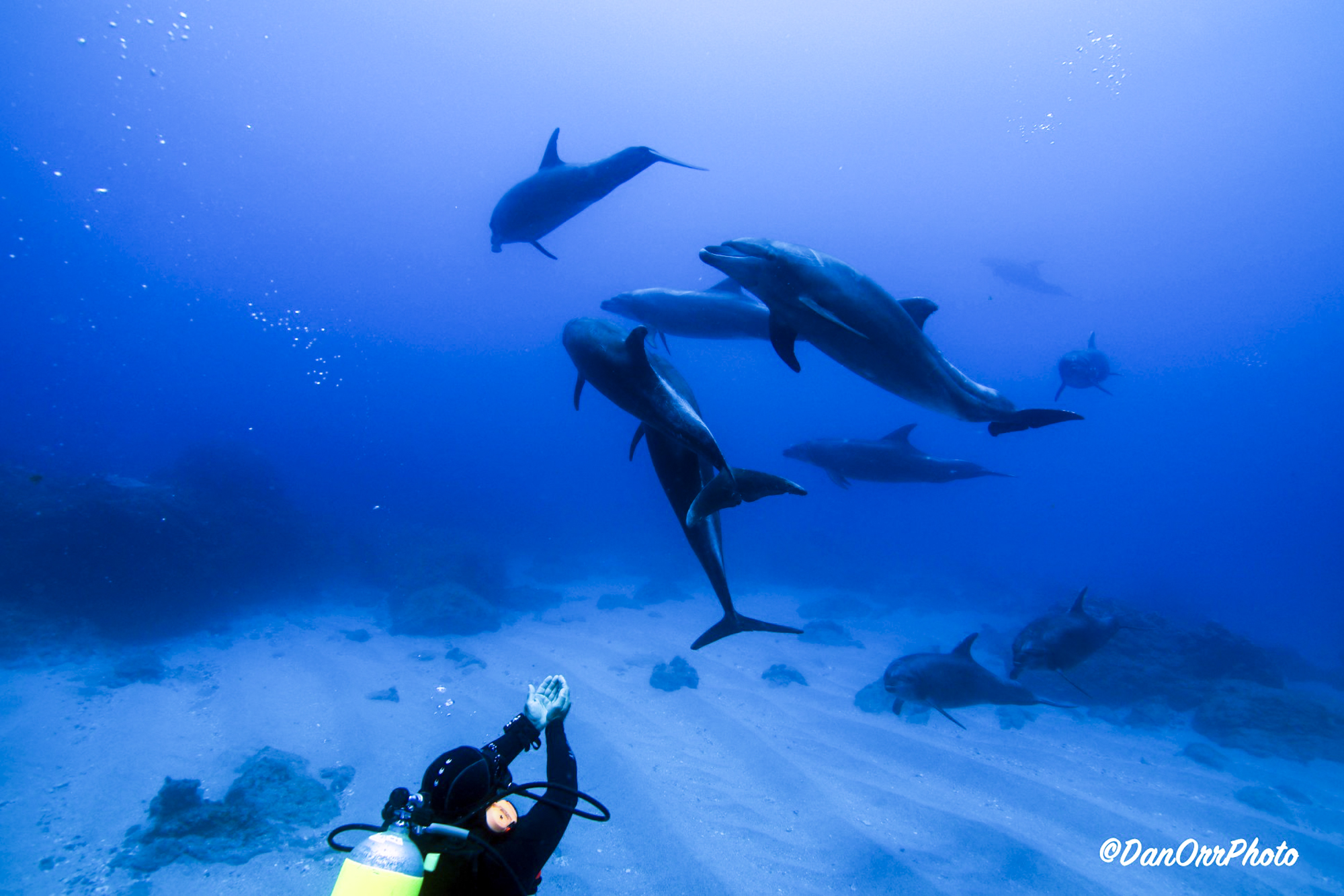 Dolphins & divers in Socorro, Photo by Dan Orr