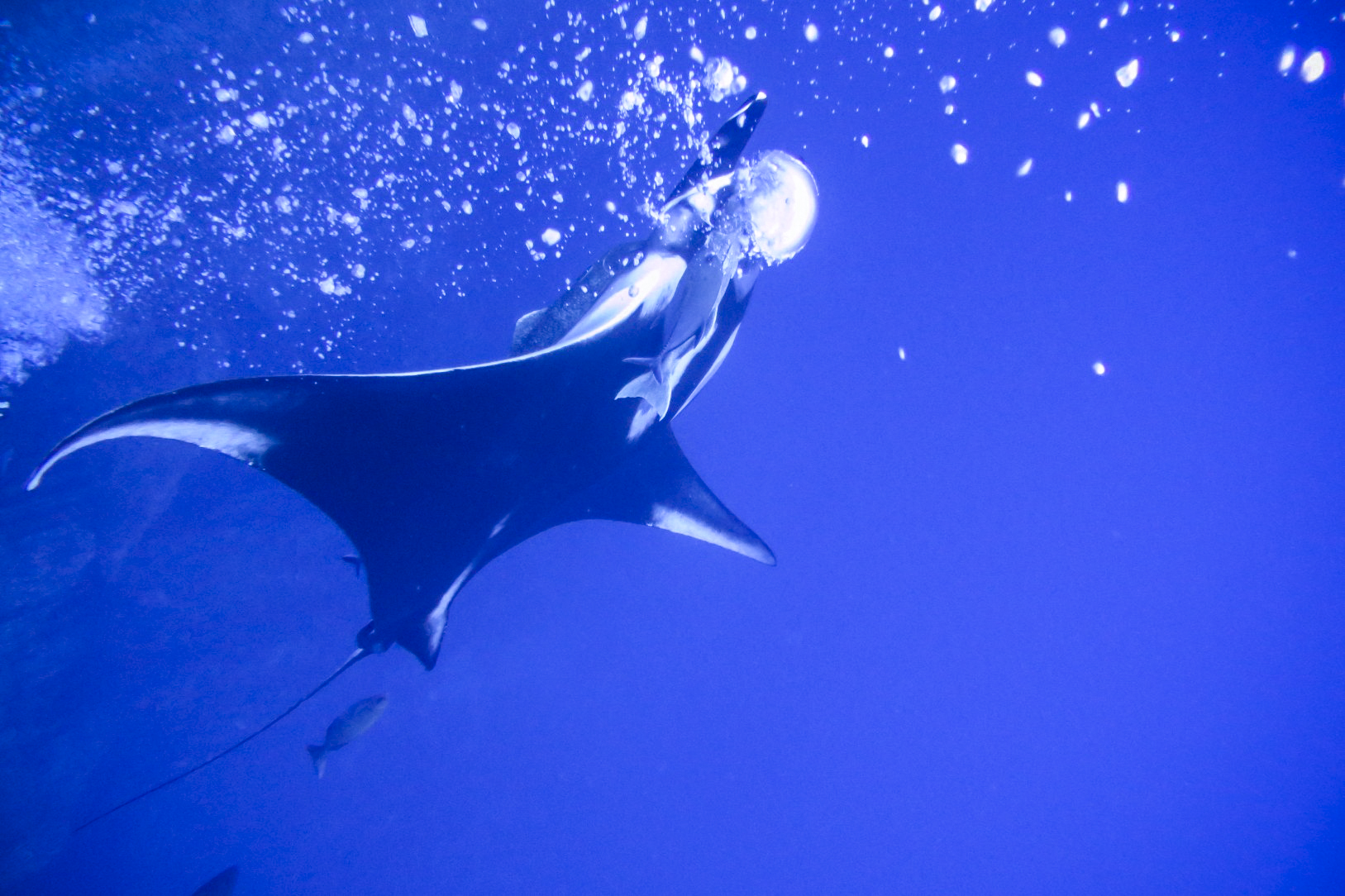 Manta & bubbles at Roca Partida