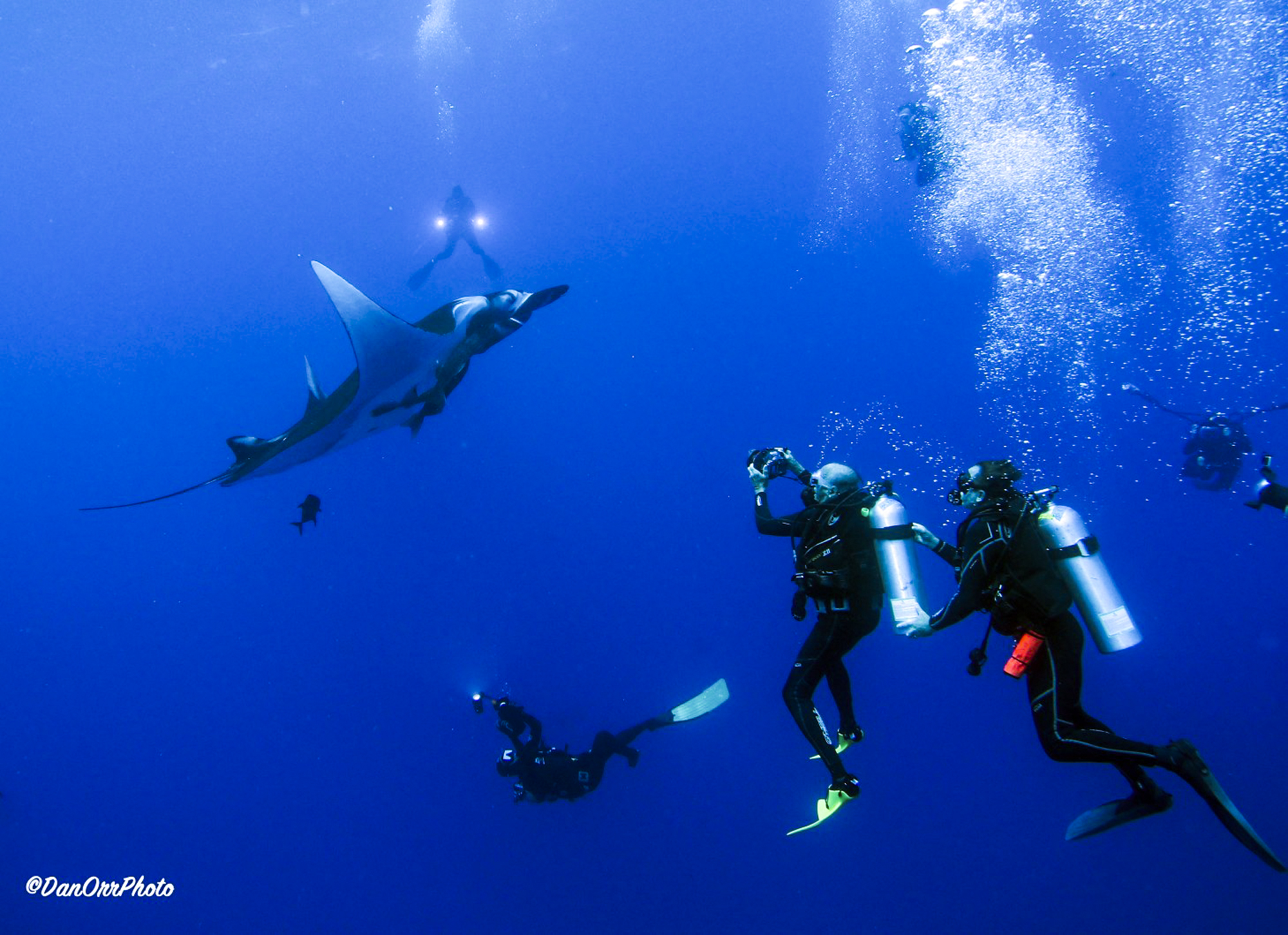 Divers check out a giant manta, photo by Dan Orr