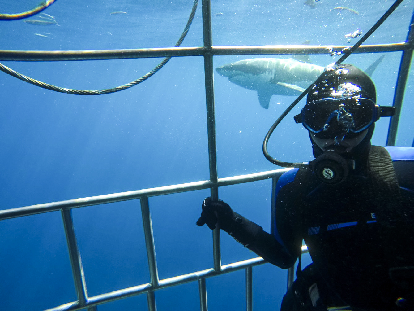 Shark Selfies at Guadalupe Island
