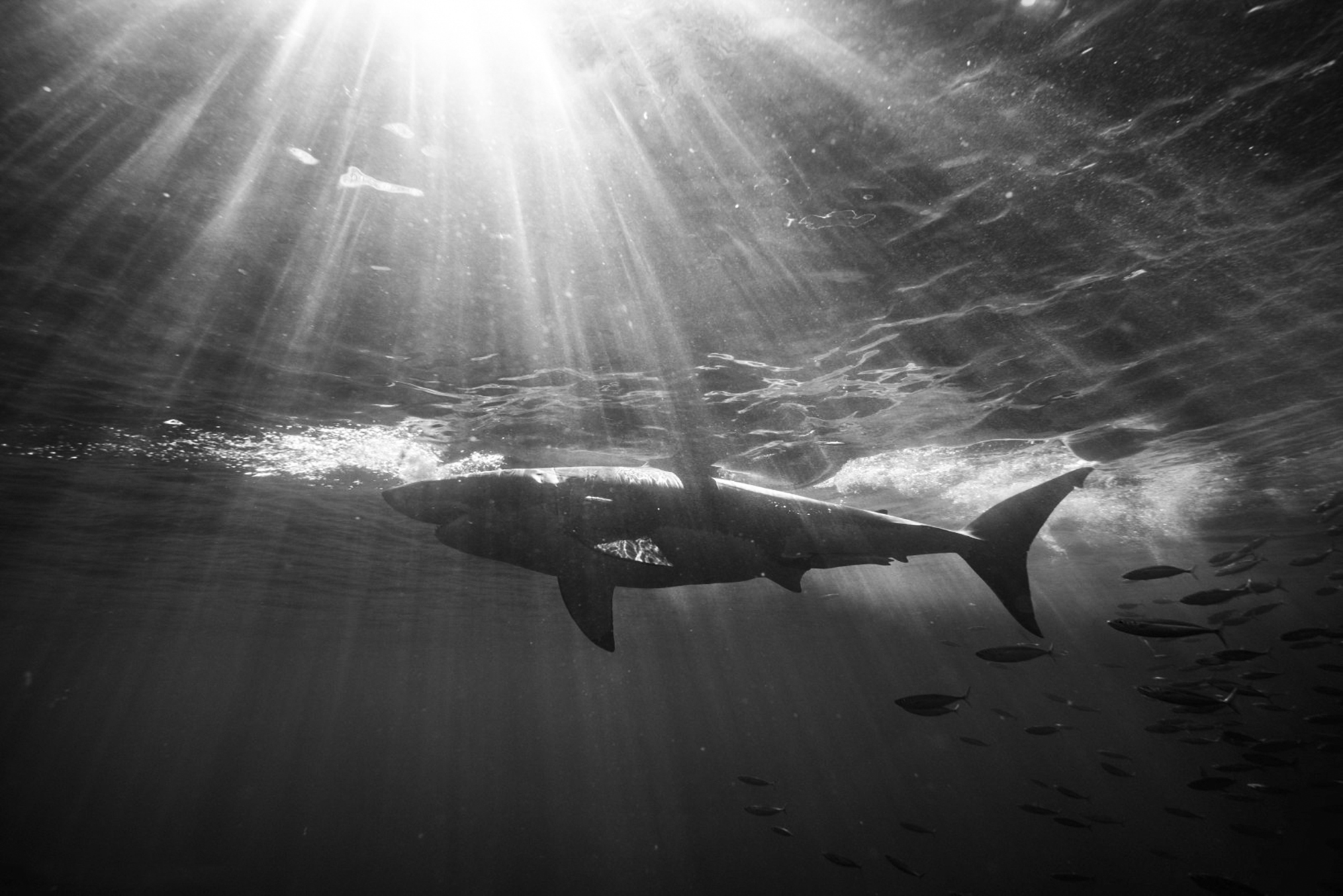 Novice Divers Meet Dolphins, Sea Lions and Sharks!