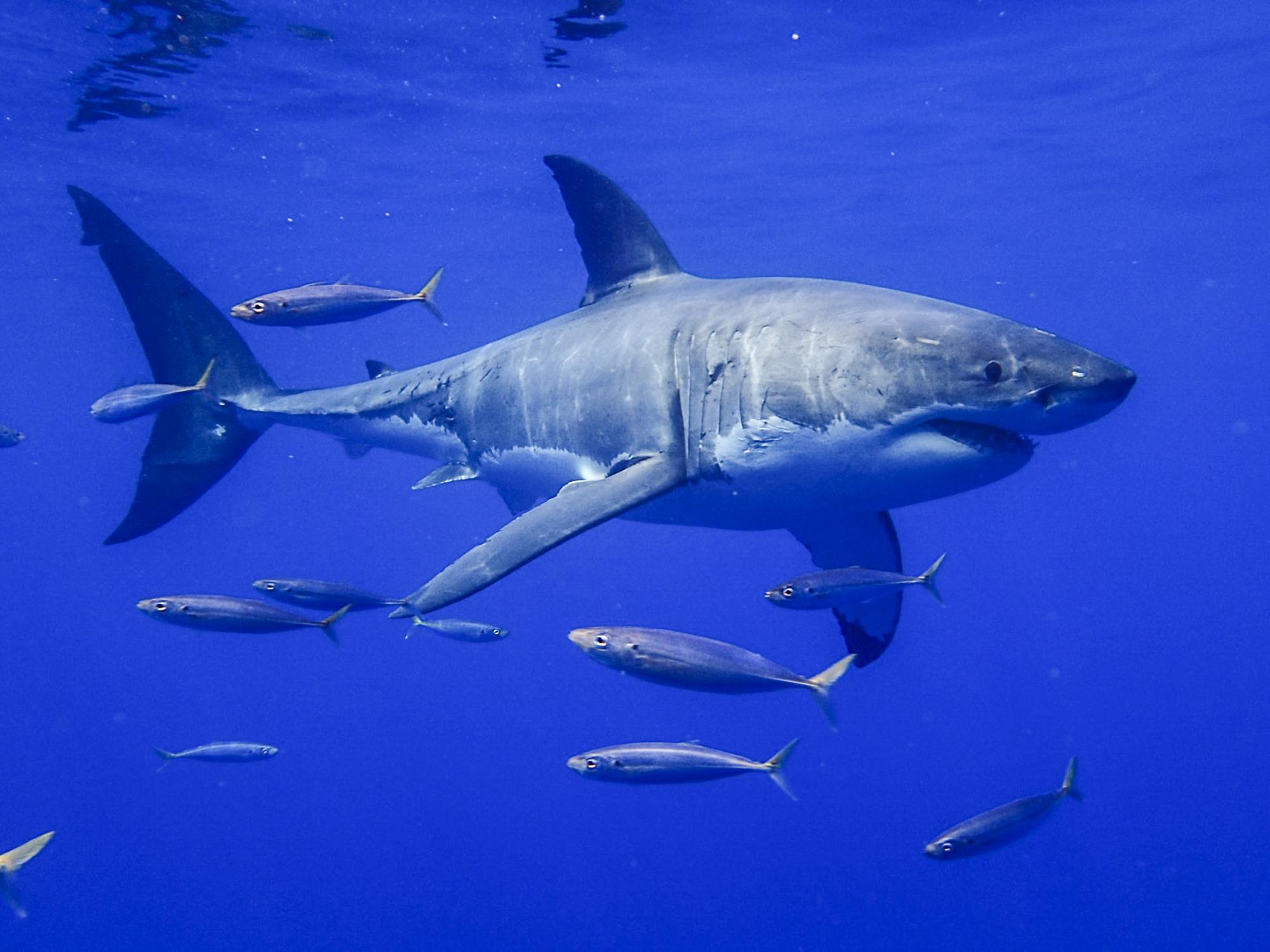 47 Sharks Identified in One Trip!!