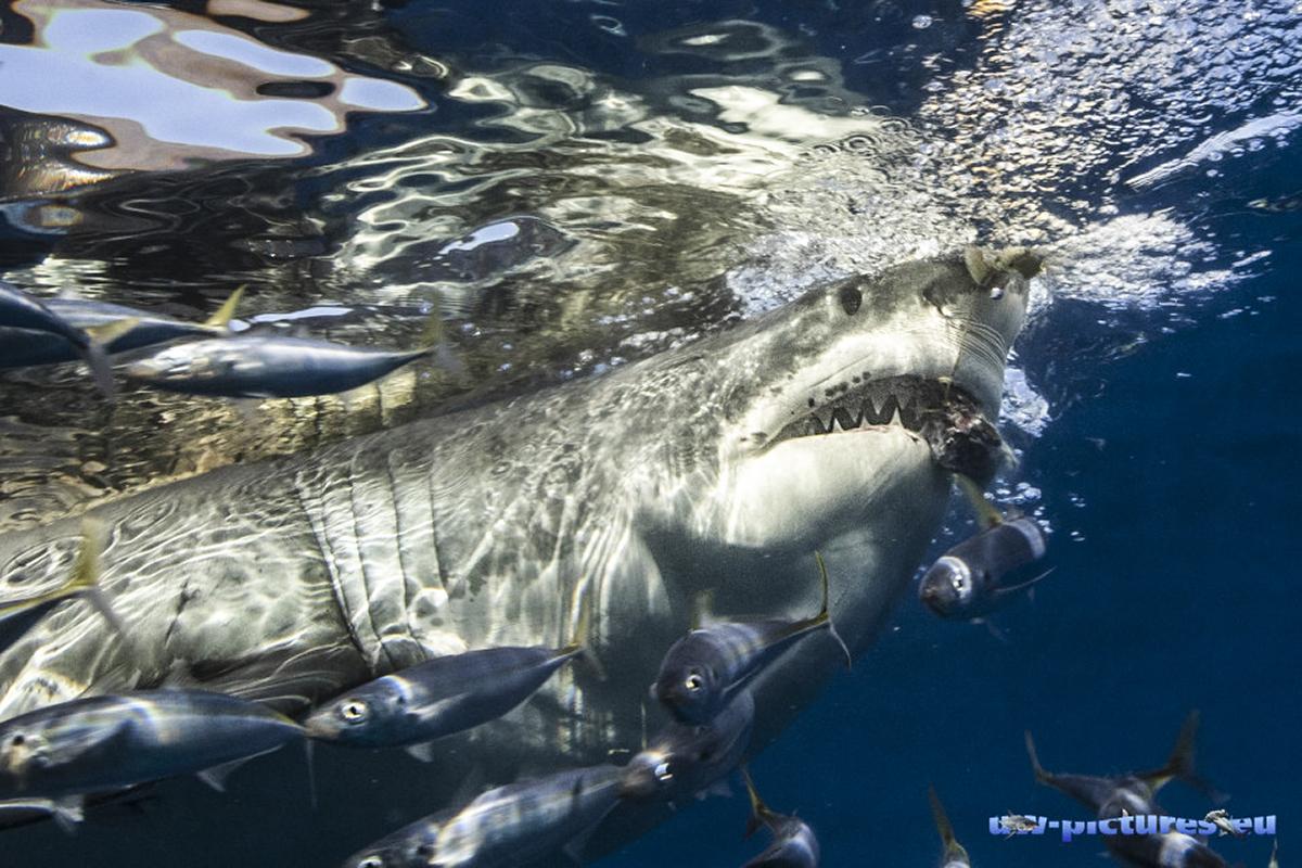 Lurking under the surface! Photo by Herbert Futterknecht