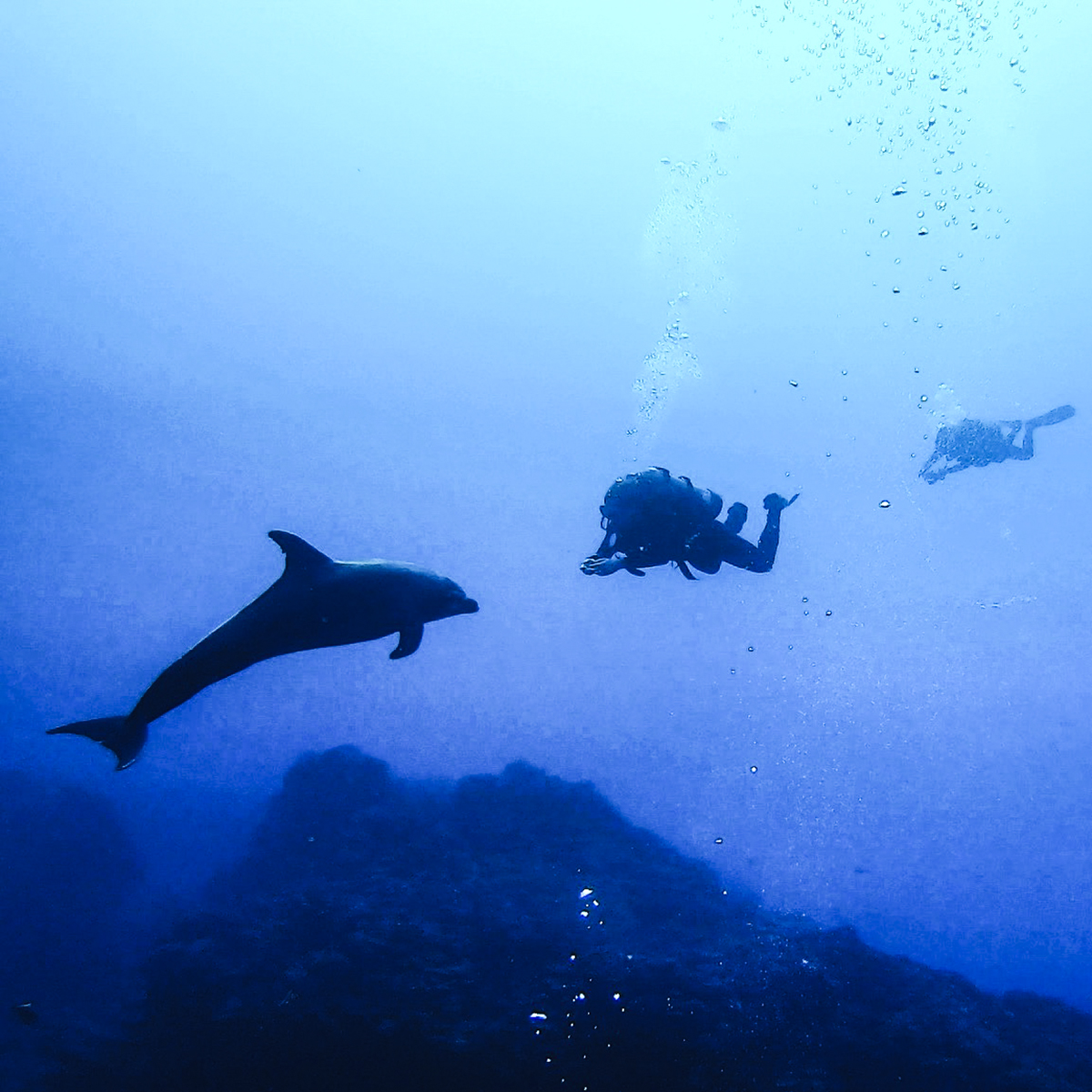A curious dolphin checks out a diver