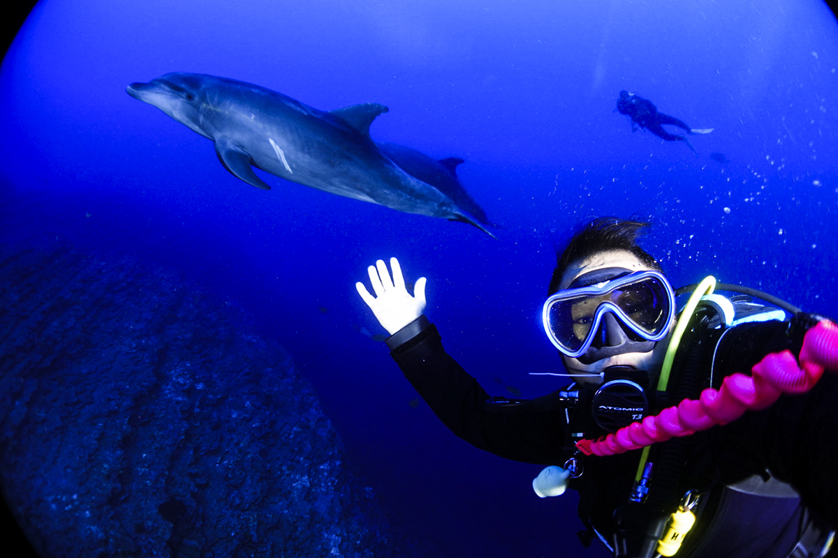 Dolphin Selfies!