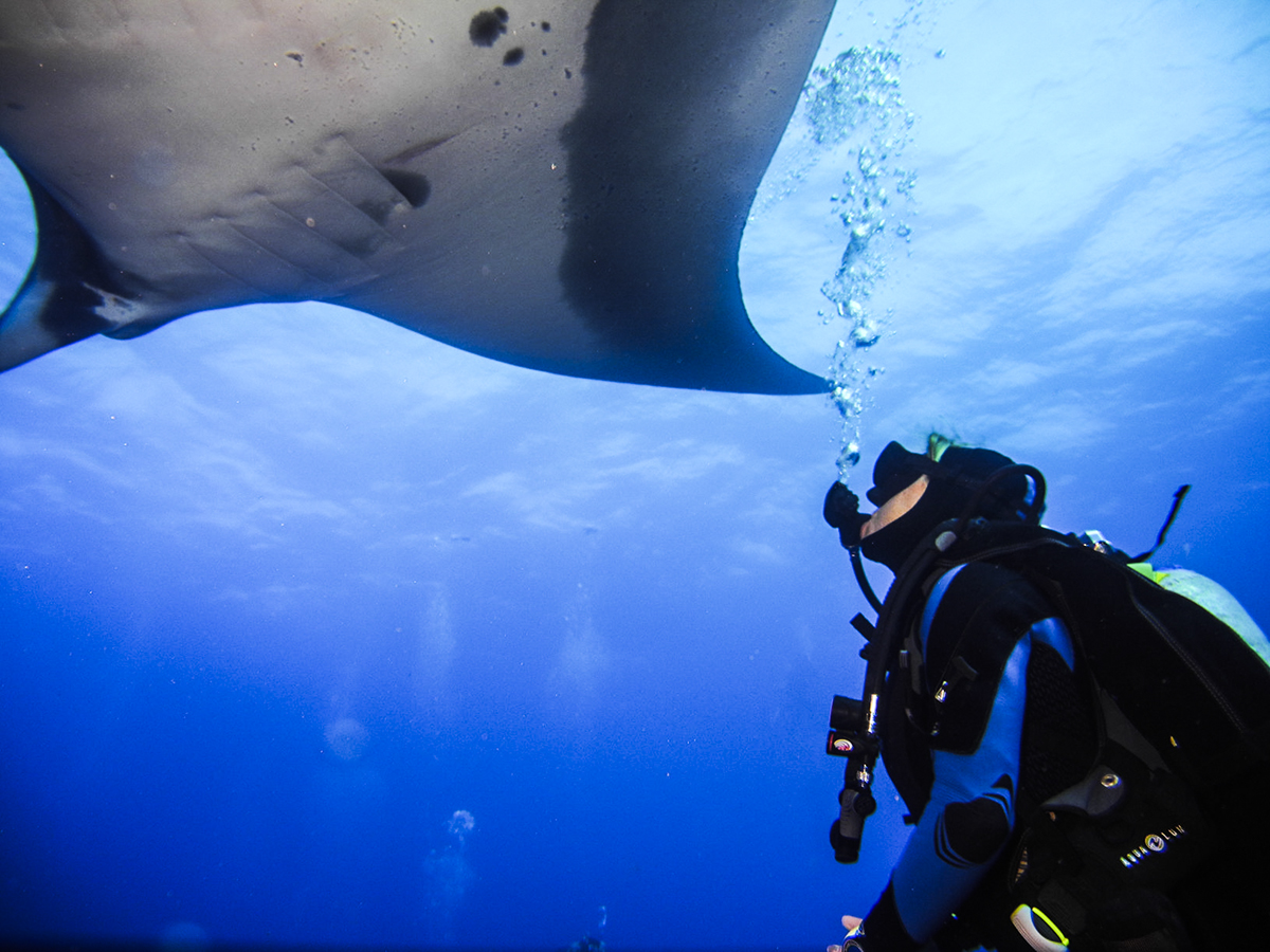 A manta gets up close and personal with a lucky diver