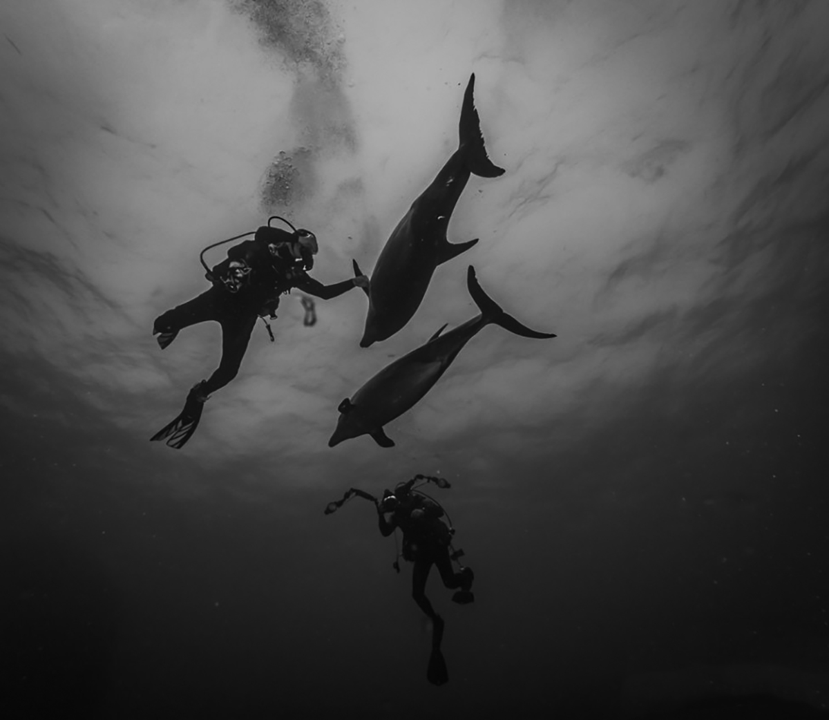 Playful dolphins come to say hello. Photo by Stan Bell