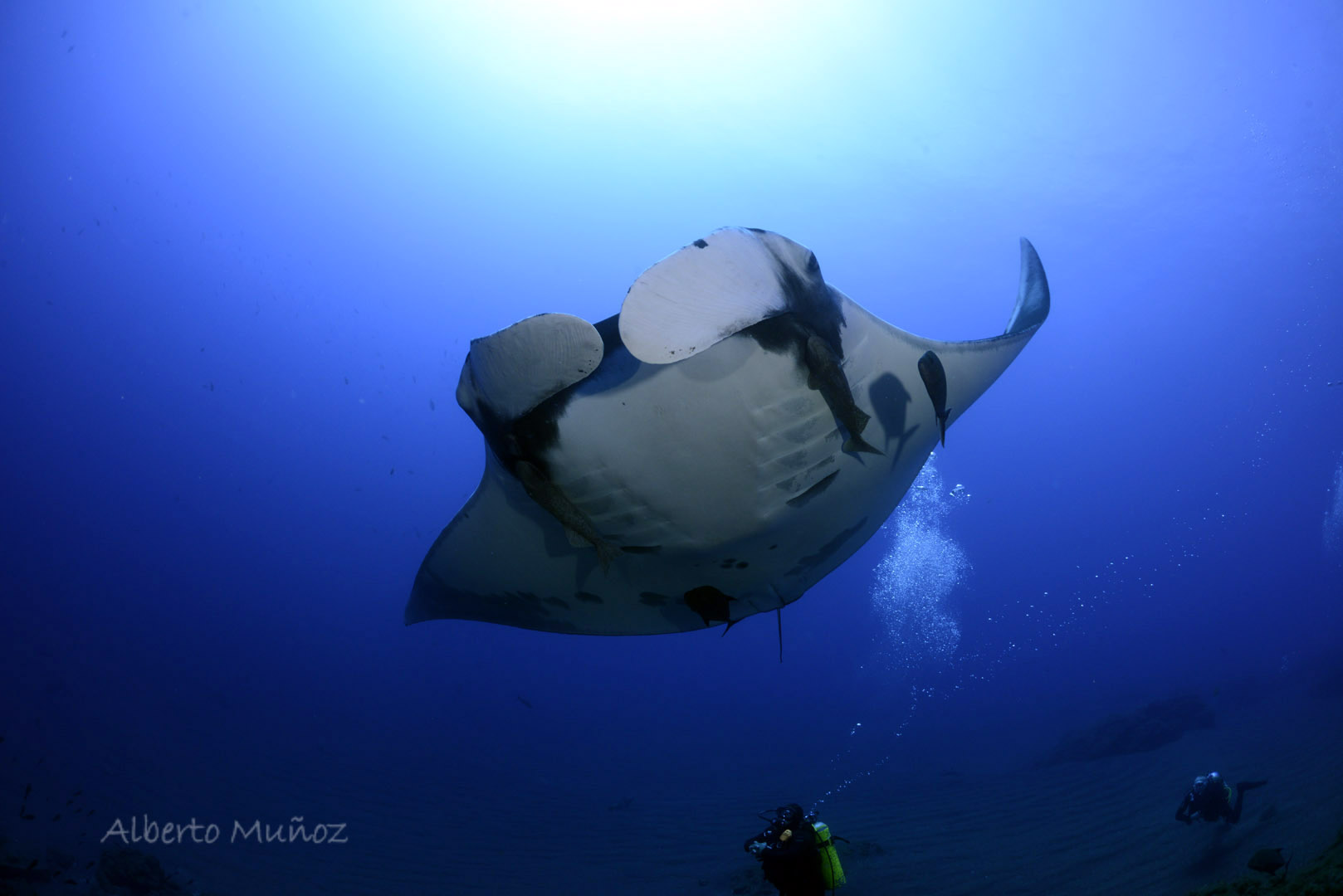 Dolphins and mantas galore !