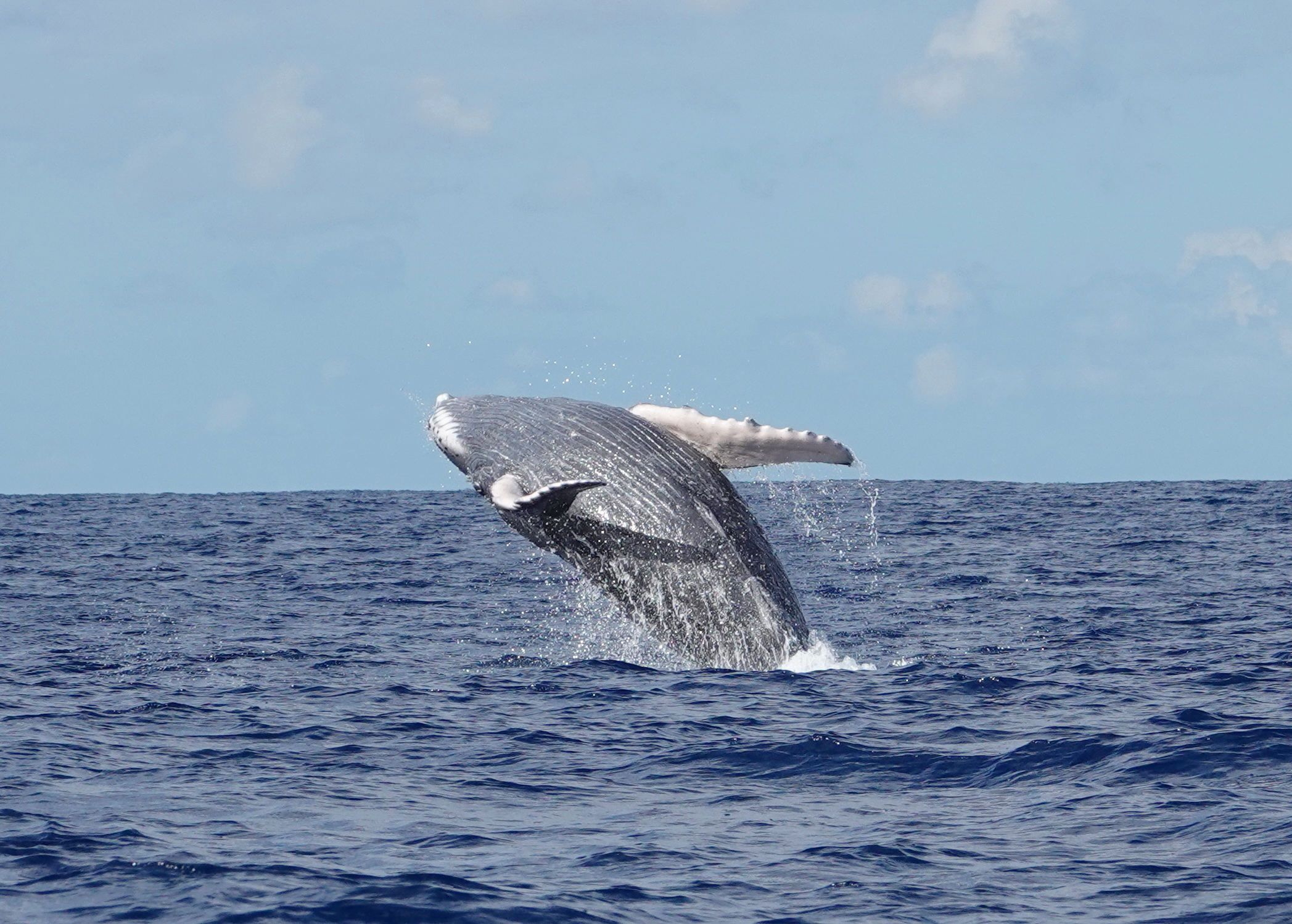 We see more humpback whales this year!