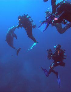 Dolpins, Nautilus Undersea