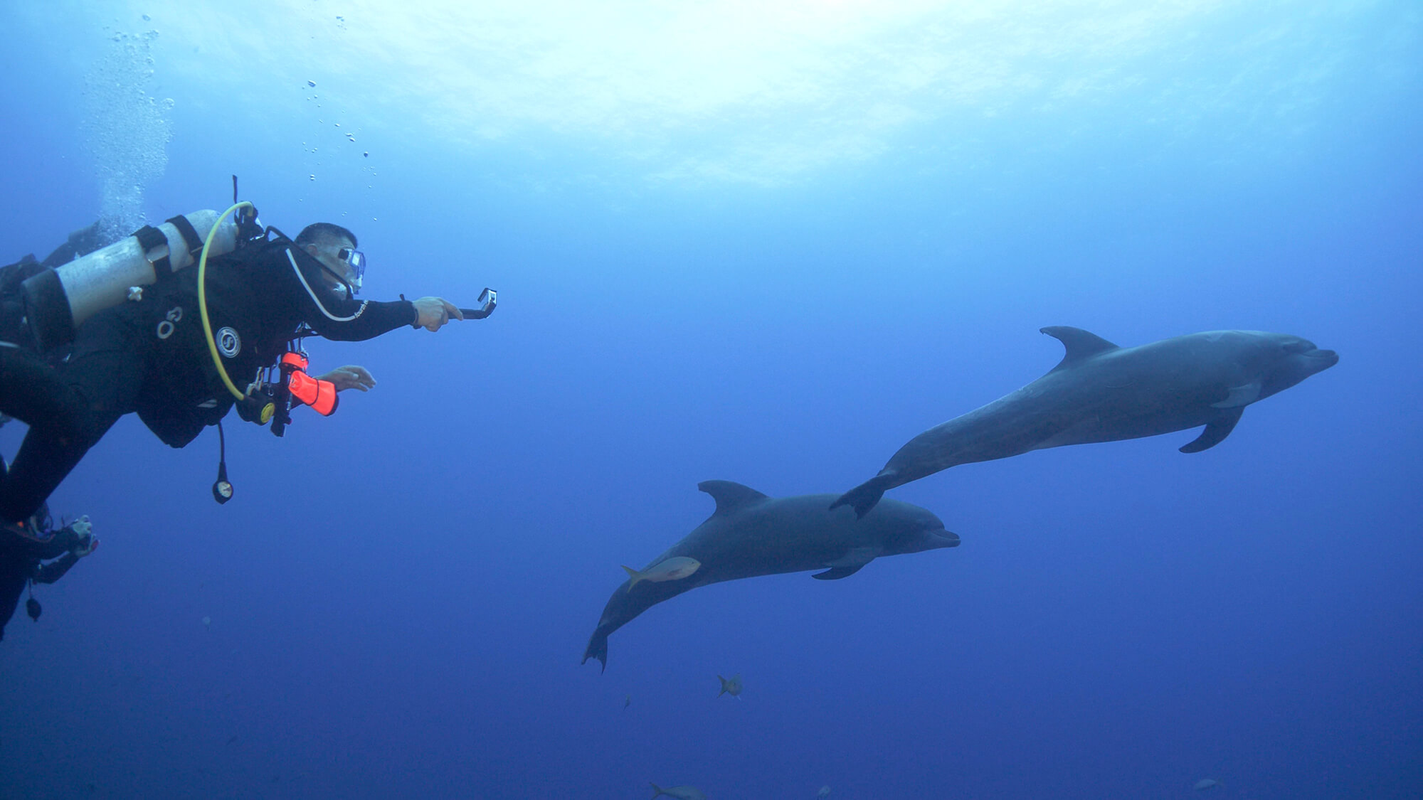 diver films dolphins with GoPro