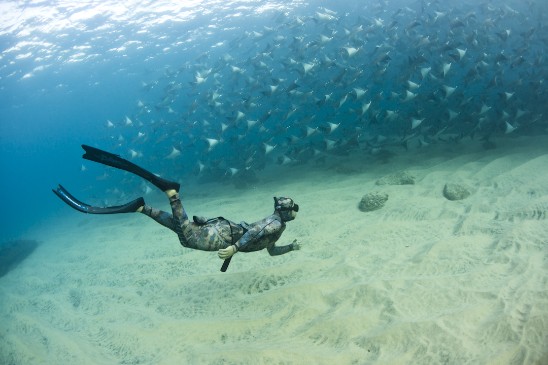 Freediving with mobula baja california