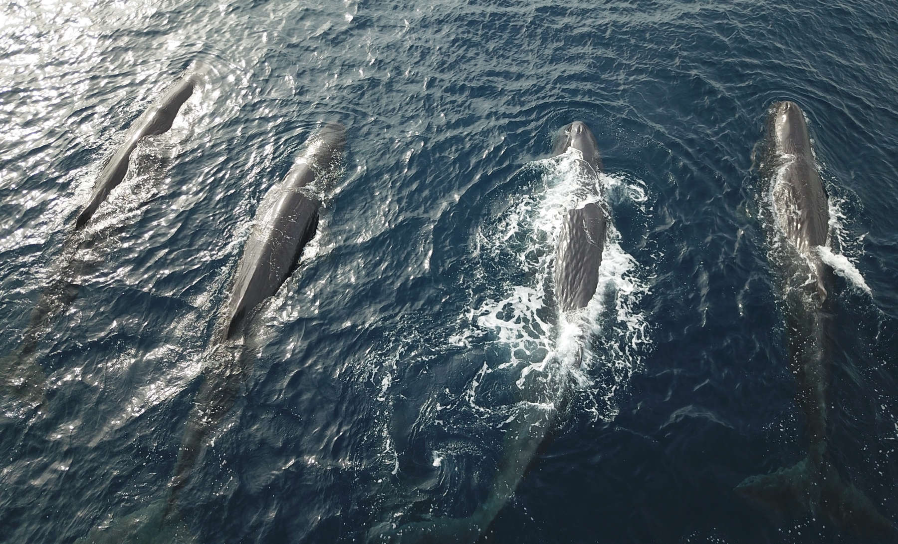 Swimming with Sperm Whales in the Sea Of Cortez