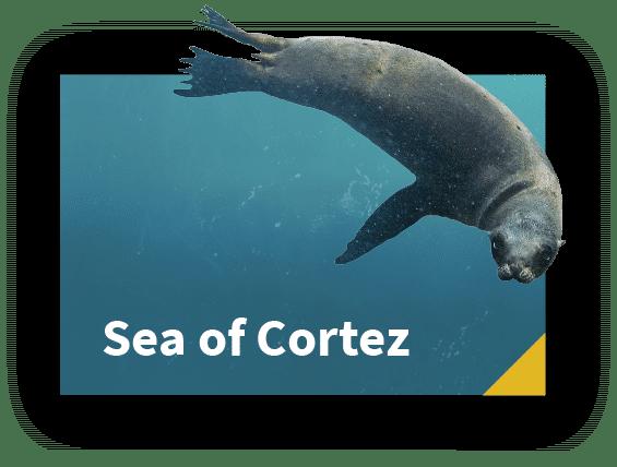 Sea of Cortez and Cabo Pulmo Liveaboard