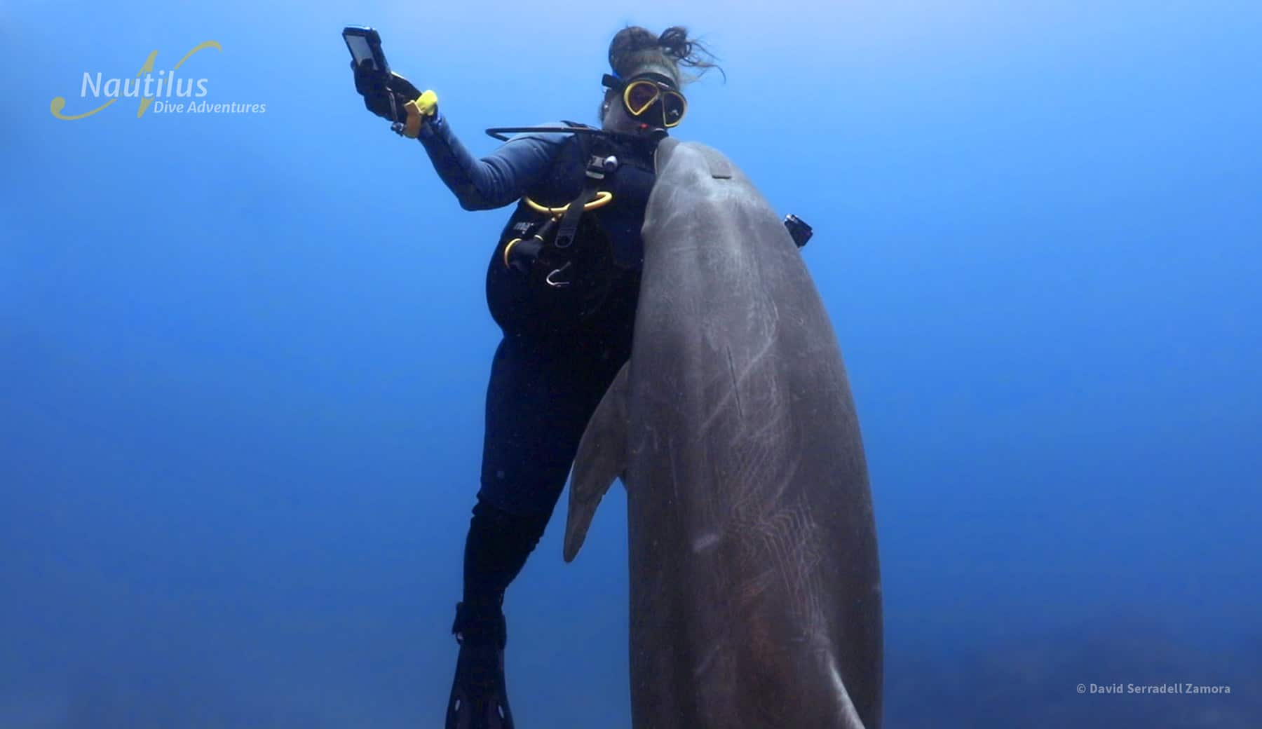 Friendly dolphin interact with diver