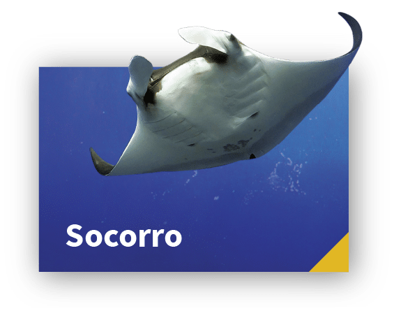 Liveaboard diving with Socorro Giant Manta