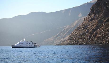 Nautilus Belle Amie at guadalupe Island