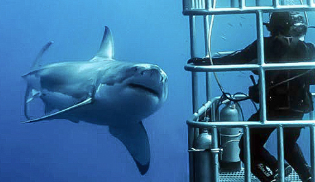 Shark cage diving at Guadalupe Island