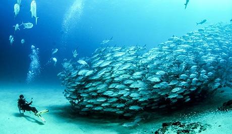Cabo Pulmo UNESCO heritage site huge schools of fishs