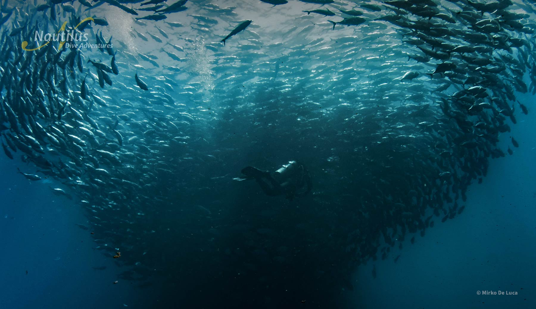 Being caught in the middle of a school of fish is amazing