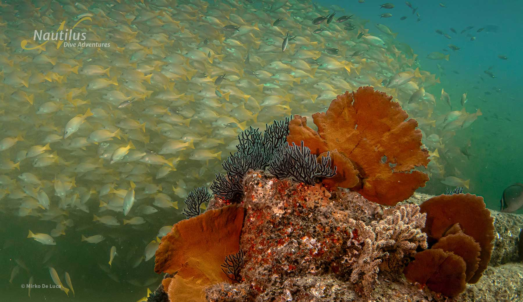 Coral reef in the sea of Cortez