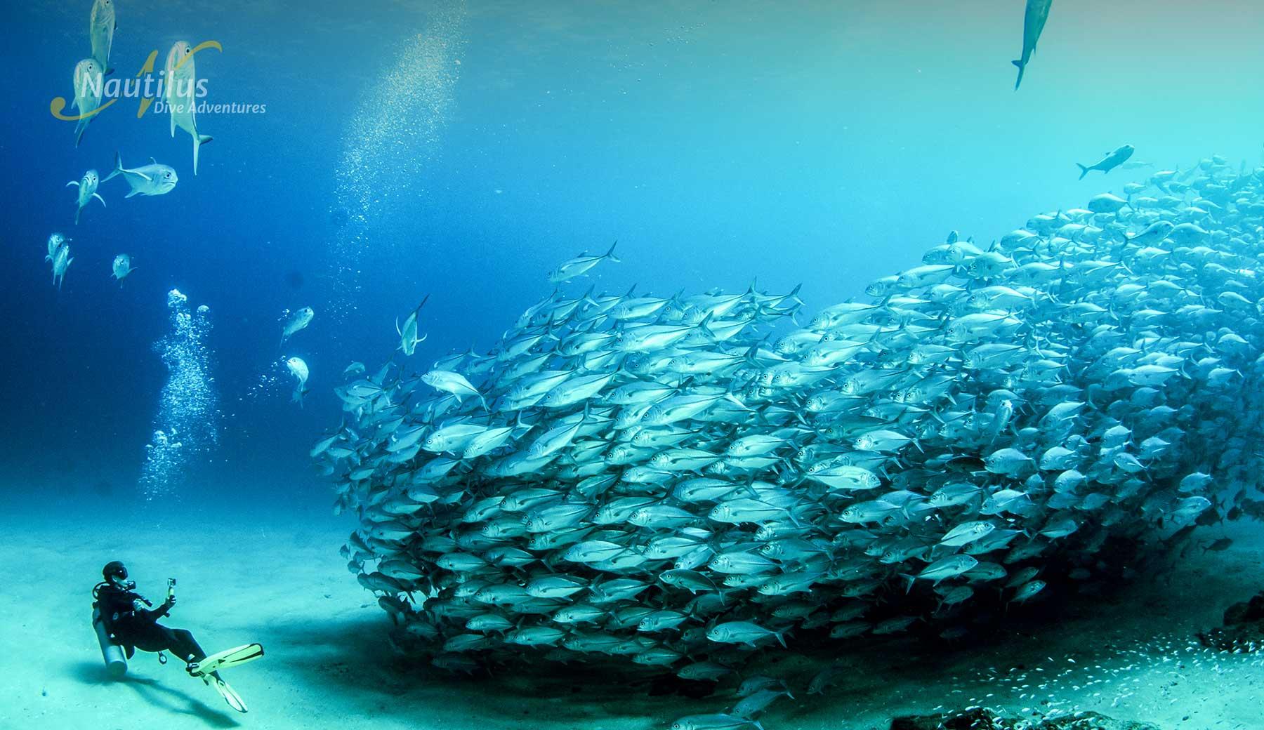 Huge Schools of fishs