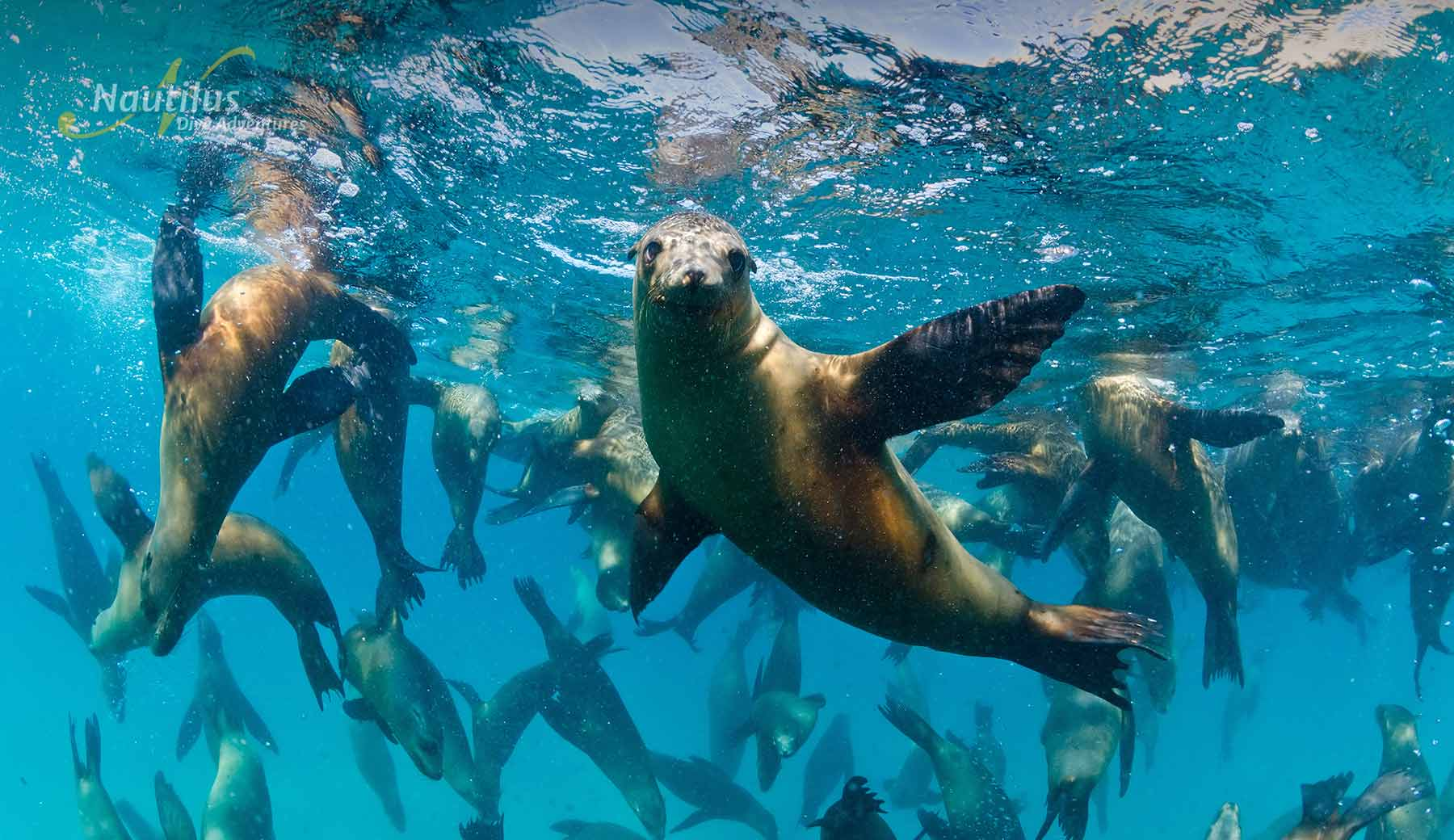 Encounters with Sea lions are amazing