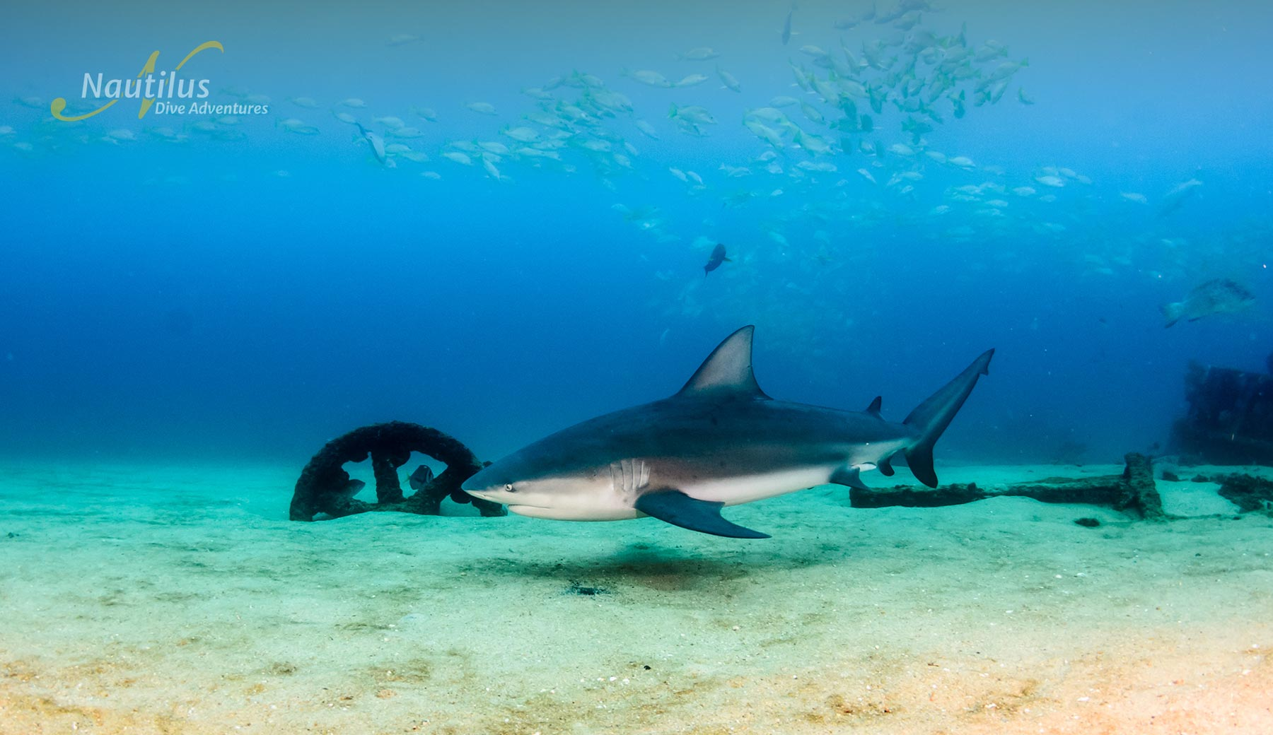 Bull shark at Cabo Pulmo