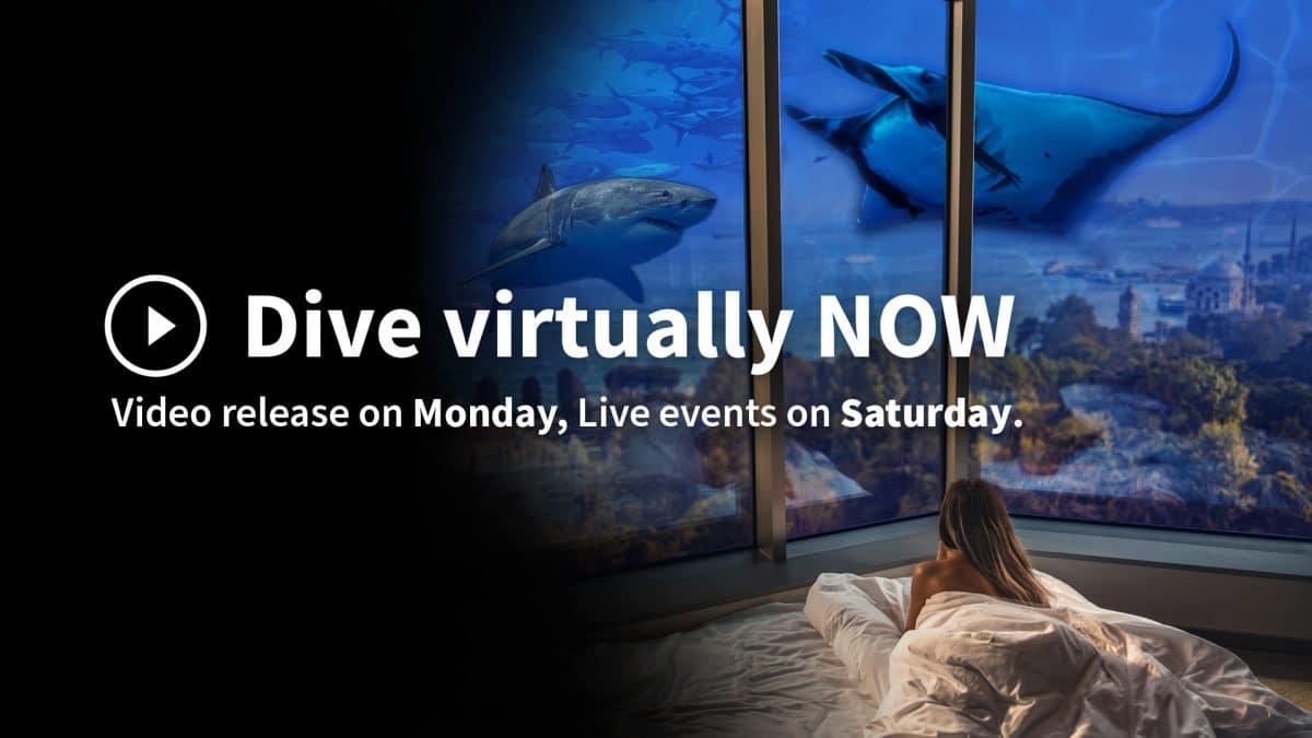 Dive virtually now