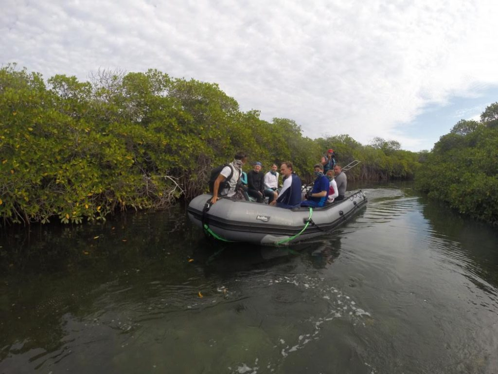 Mangrove, Sea of Cortez Mexico