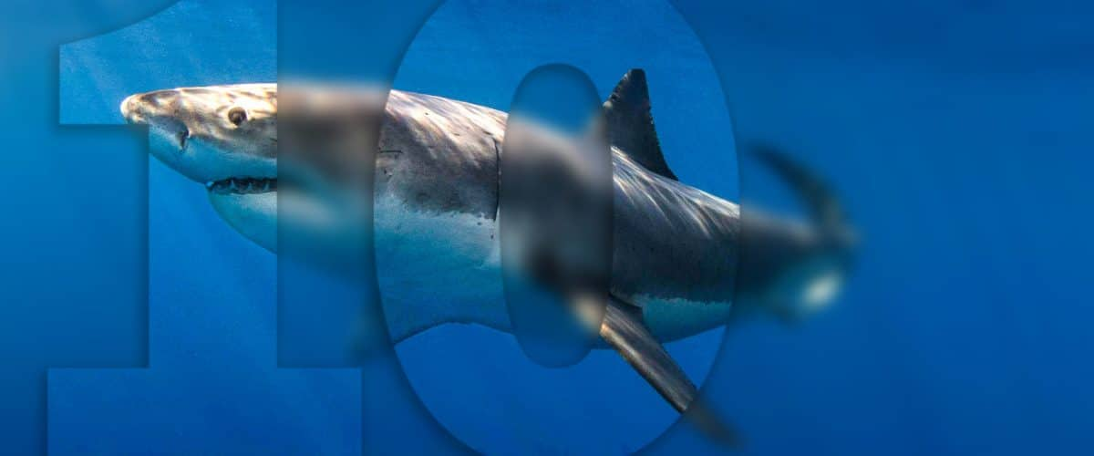 10 great white shark facts