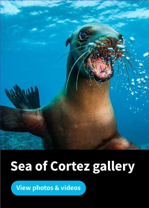 Sea of Cortez Gallery