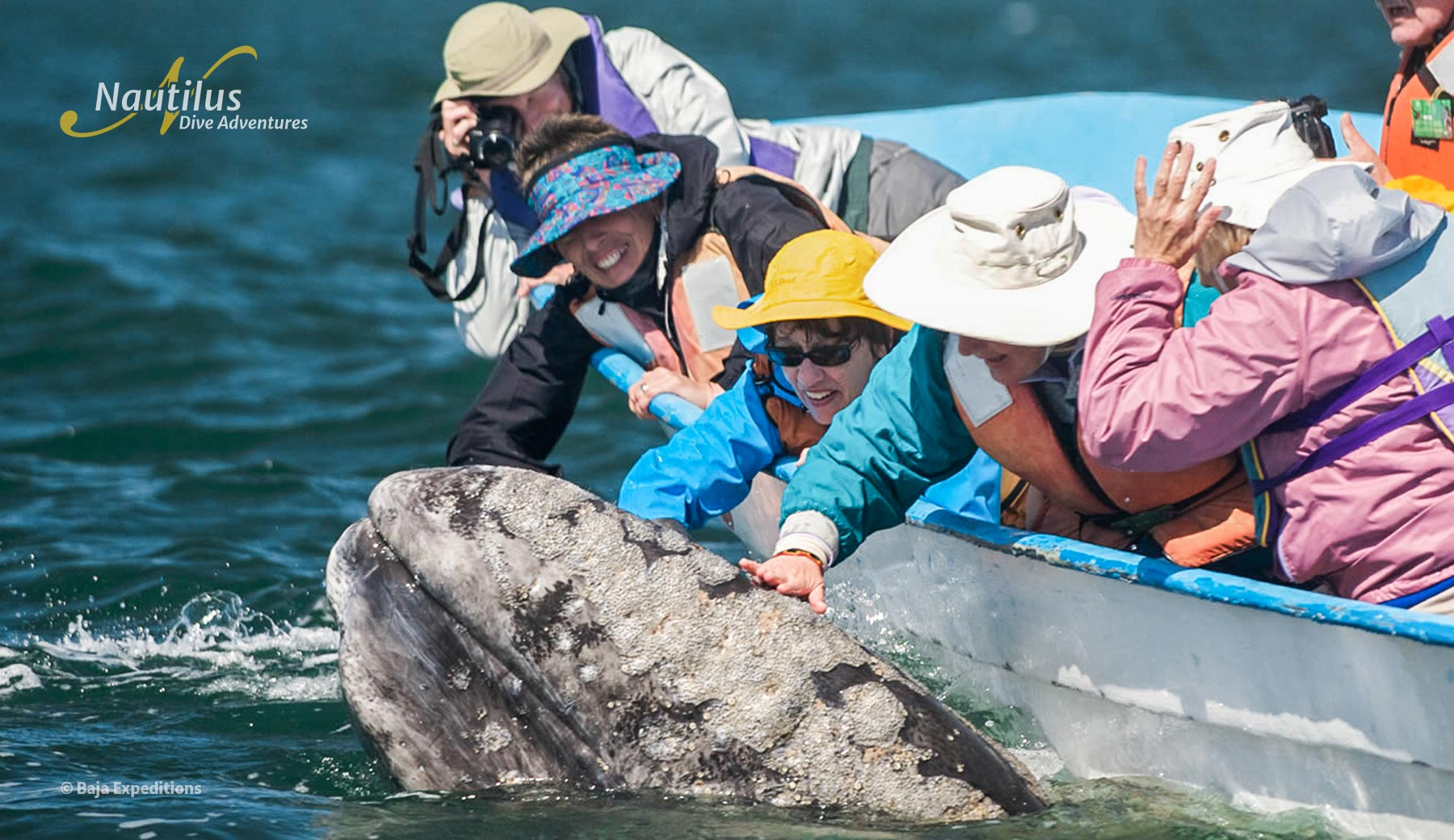 Interacting with Grey whales at San Ignacio Lagoon