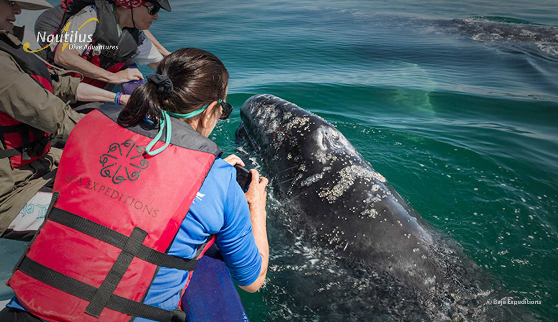 Encountering Pacific Grey Whale